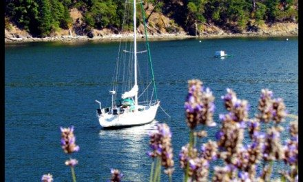 Photo of the Day:  Sailboats and Lavender at Rosario Resort