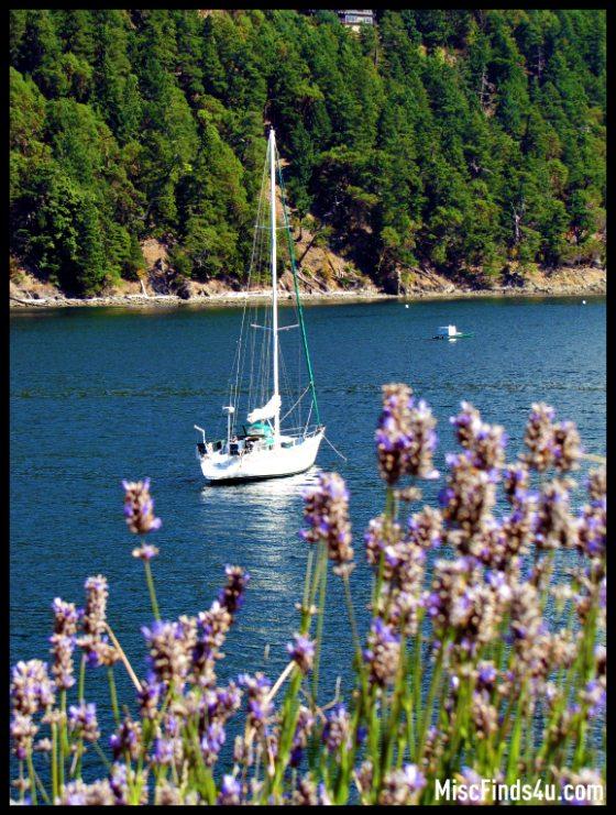sailboatrosario6