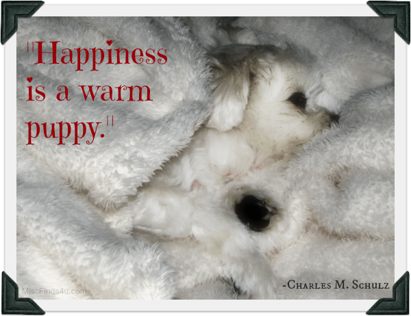Happiness is a warm puppy - quote by Charles Shulz. Gracie our Maltese wrapped in her favorite blanked