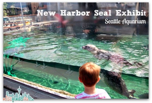 New Harbor Seal Exhibit at the Seattle Aquarium