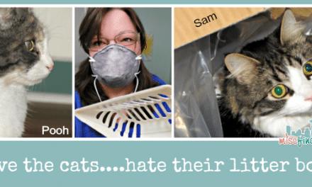 New Odor-Fighting Cat Litter