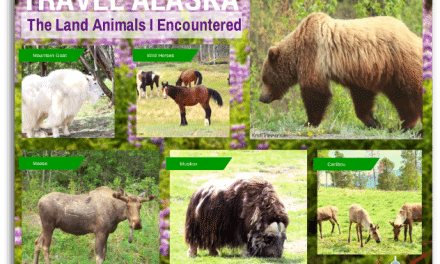 Travel Alaska: The Land Animals I Encountered