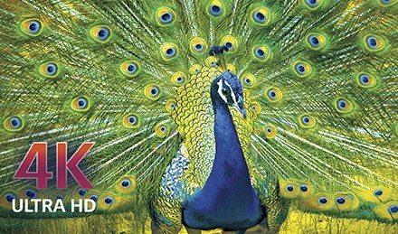 LG OLED TV: A Great Family Gift from Best Buy! @BestBuy #HintingSeason #OLEDatBestBuy