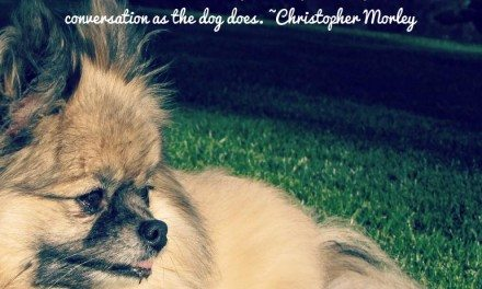 Dog Quotes: Because They Mean Everything To Us