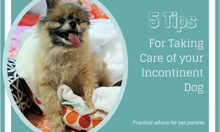 5 Tips For Taking Care of an Incontinent Dog: Practical Advice for Pet Parents #PetcoDelivers